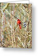 A Spot Of Red Greeting Card by Lorraine Louwerse