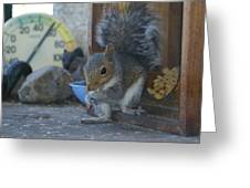 A Squirrel In 55 Degree Weather Greeting Card