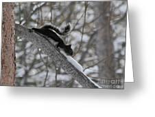 A Squirrel Snow Cone Greeting Card