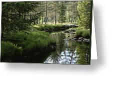 A Stream Wanders Through A Lush Taiga Greeting Card