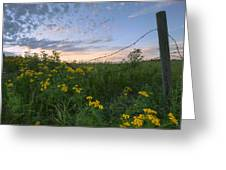 A Summer Evening Sky With Yellow Tansy Greeting Card