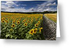 A Sunny Sunflower Day Greeting Card