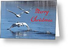A Swan Christmas Greeting Card