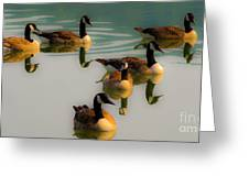 A Swim At Sunset Greeting Card