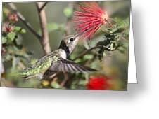 A Taste For Nectar  Greeting Card