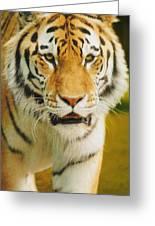 A Tiger Greeting Card