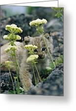 A Tiny Lynx Cub Felis Lynx Peeks Greeting Card