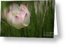 A Touch Of Blush Greeting Card