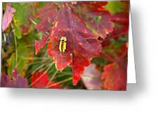 A Touch Of Yellow In Fall Greeting Card
