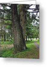A Tree Divided Greeting Card