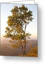 A Tree Outlined By The Rays Of The Setting Sun At Pachmarhi Greeting Card