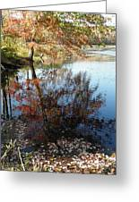 A Trees Reflection And Fallen Leaves  Greeting Card