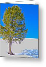 A Trees Shadow Greeting Card