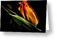A Tulip With Sheen Greeting Card