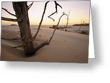 A Twilight View Of Drift Wood Greeting Card