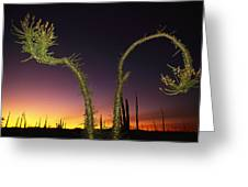 A View At Twilight Of A Boojum Tree Greeting Card