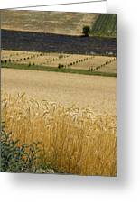 A View Of A Summer Field Of Wheat Greeting Card