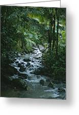A View Of A Tropical Stream In El Greeting Card