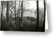A View Through The Trees Bw Greeting Card