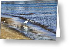 A Visit To The Beach Greeting Card