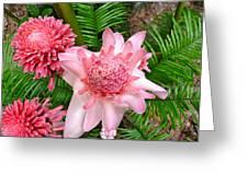 A Walk In The Botantical Gardens Greeting Card