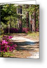A Walk In The Springtime Woods Greeting Card