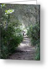 a walk about fairy wood - Mediterranean autumn forest Greeting Card