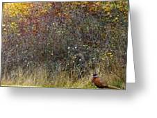 A Watchful Pheasant Greeting Card