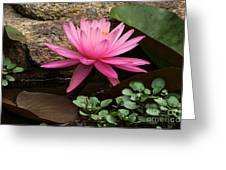 A Waterlily's Grace Greeting Card