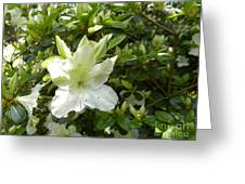 A White Spring Begins Greeting Card