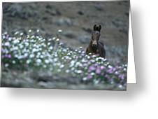 A Wild Horse On A Wildflower Covered Greeting Card