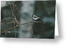 A Willow Tit Parus Montanus Perches Greeting Card