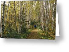 A Woman Walks Down A Birch Tree-lined Greeting Card