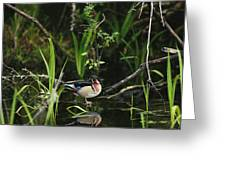 A Wood Duck Reflected In Creek Water Greeting Card