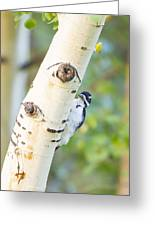 A Woodpeck Behind An Eye Of A Tree Greeting Card