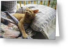 A Yawning Cat Wakes From A Nap Greeting Card
