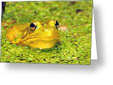 A Yellow Bullfrog Greeting Card