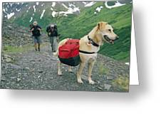 A Yellow Labrador, Wearing A Backpack Greeting Card by Rich Reid