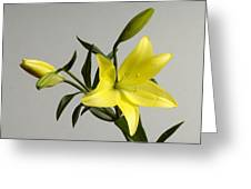 A Yellow Lily Lilium Canadense Greeting Card