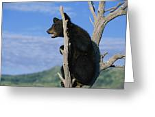 A Young American Black Bear Urus Greeting Card