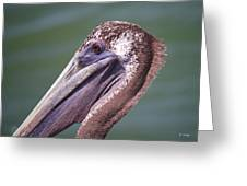 A Young Brown Pelican Greeting Card