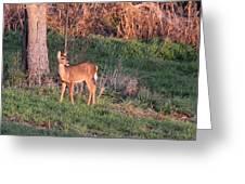 Aah Baby - Deer Greeting Card