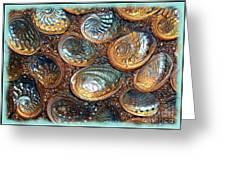 Abalones Greeting Card by Judi Bagwell
