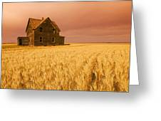 Abandoned Farm House, Wind-blown Durum Greeting Card