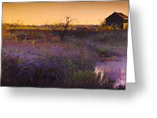 Abandoned Shack At Sunset Near A Creek Greeting Card