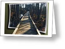 Abbotts Nature Trail Greeting Card