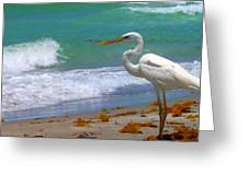 Absorbed In Long Boat Key Greeting Card
