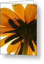 Abstract Black Eyed Susan II Greeting Card