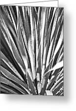 Abstract Cactus Greeting Card