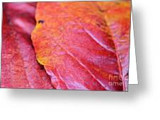 Abstract Dogwood In Autumn Greeting Card